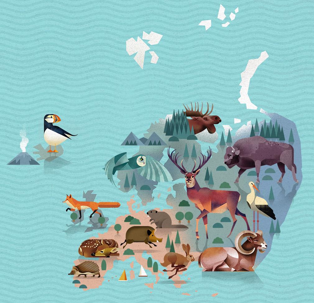 Die Welt Karte.Die Welt Der Tiere Weltkarte Marmota Maps